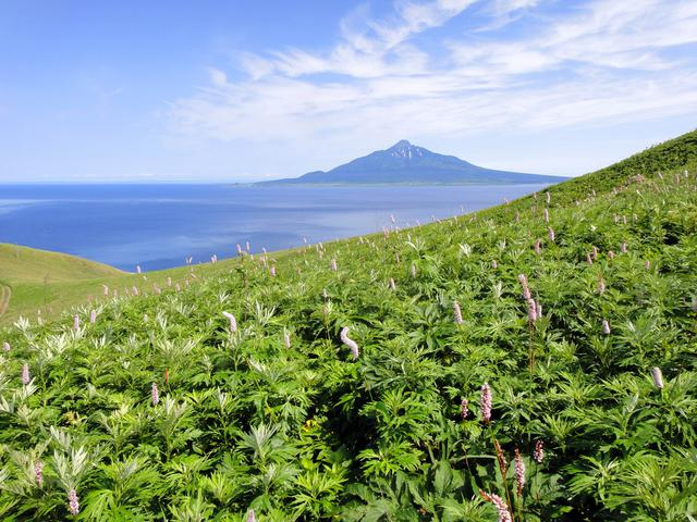 画像: 桃岩展望台から見た利尻山