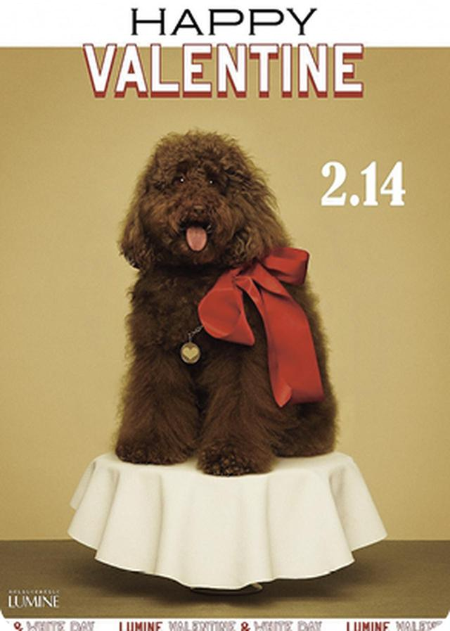 画像3: ルミネでバレンタイン ショコラ オ ルミネ