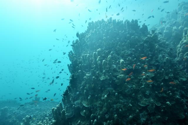 画像7: 星のや竹富島 珊瑚礁が隆起してできた島で海の恵みに癒される 「珊瑚美ら(ちゅら)滞在」