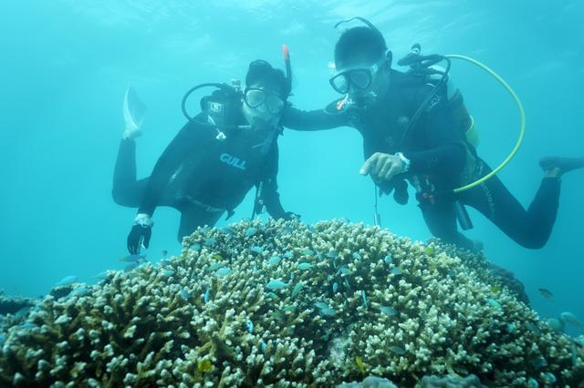 画像4: 星のや竹富島 珊瑚礁が隆起してできた島で海の恵みに癒される 「珊瑚美ら(ちゅら)滞在」
