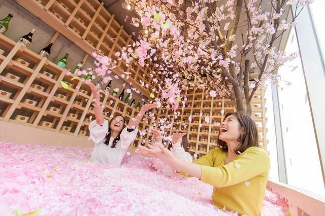 画像: SAKURA CHILL BAR サクラチルバー | 桜舞い散るチルアウトバー | Afro&Co.