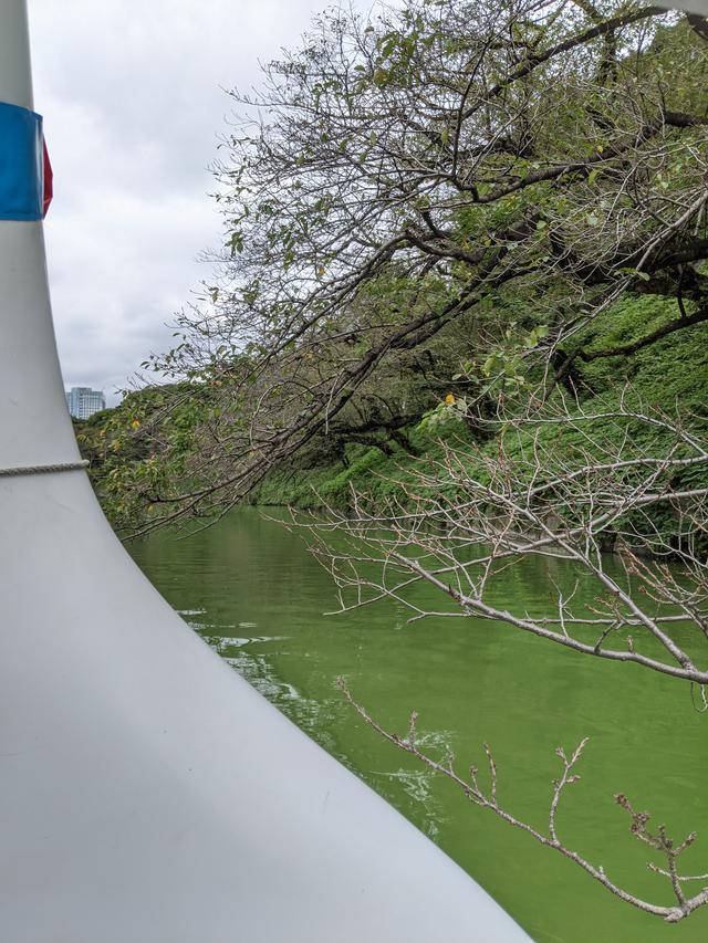 画像2: 千鳥ヶ淵でボート遊び