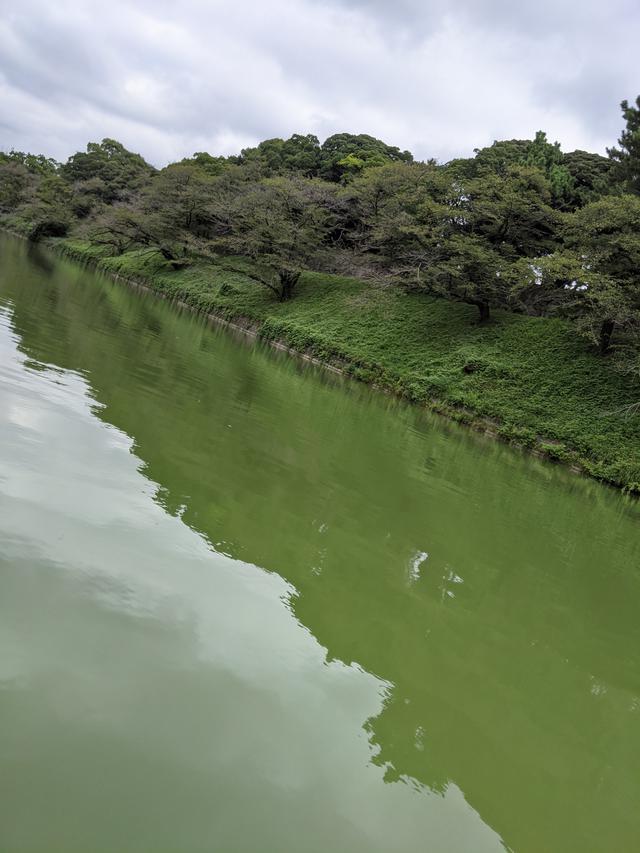 画像3: 千鳥ヶ淵でボート遊び