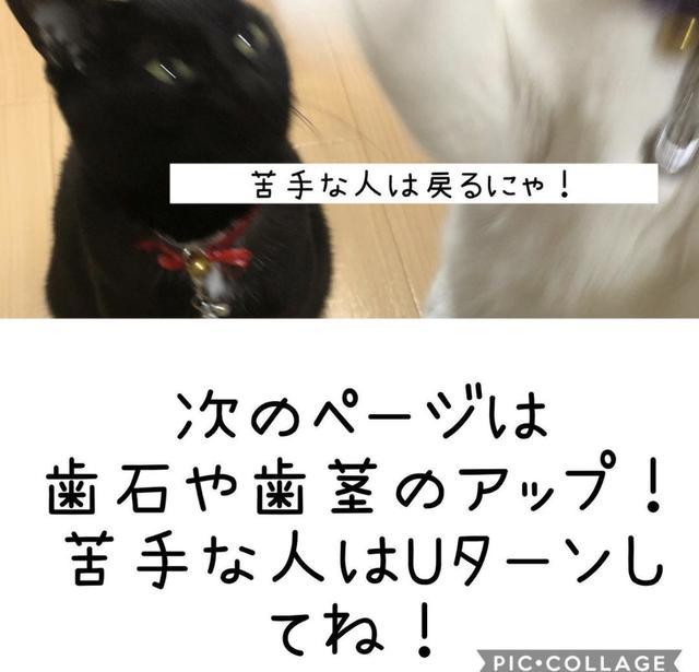 画像3: 愛猫❤︎愛犬に簡単・安全な歯石ケア