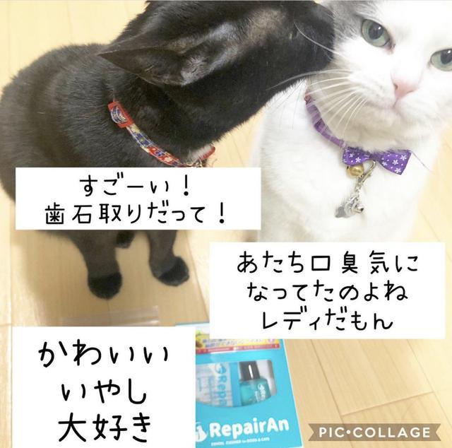 画像1: 愛猫❤︎愛犬に簡単・安全な歯石ケア