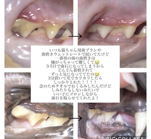 画像4: 愛猫❤︎愛犬に簡単・安全な歯石ケア