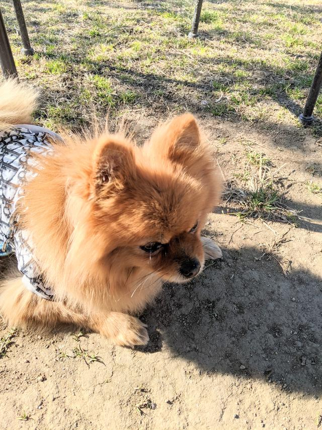 画像1: レンタル犬