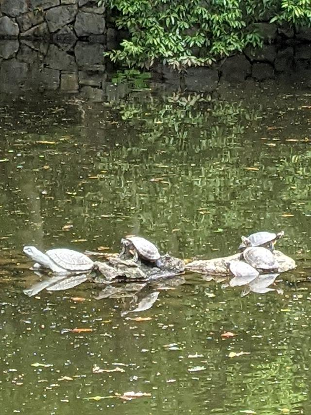 画像4: 大宮 氷川神社