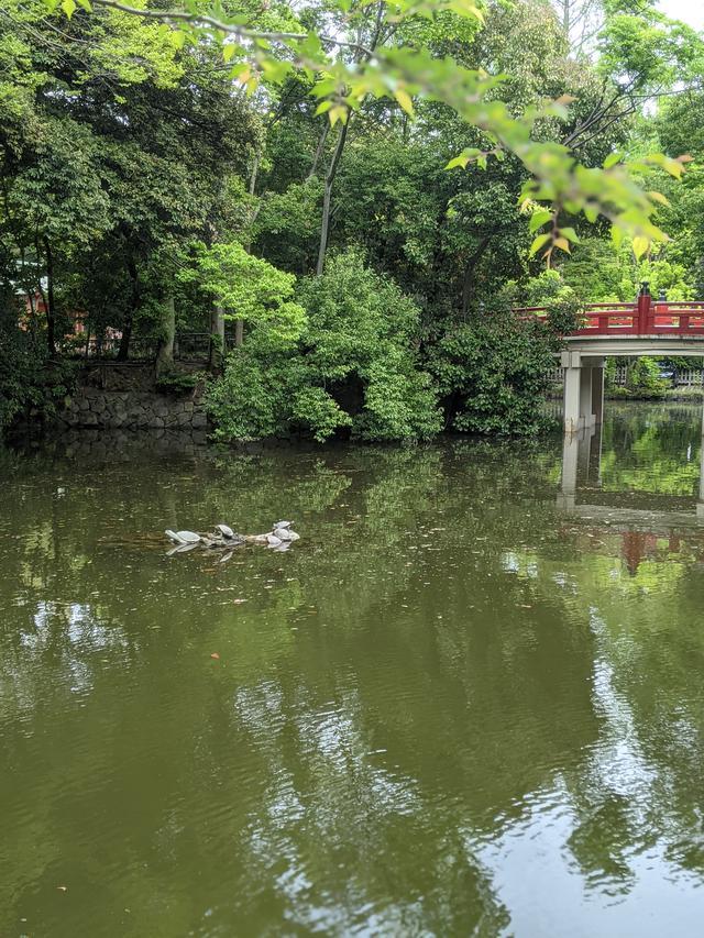 画像3: 大宮 氷川神社
