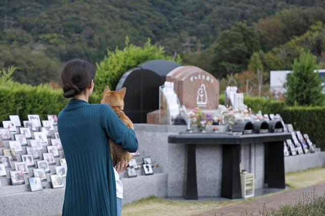 画像12: Short Story もう一つの散歩道 @北摂池田メモリアルパーク
