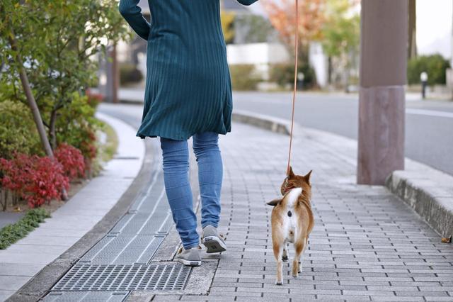 画像2: Short Story もう一つの散歩道 @北摂池田メモリアルパーク
