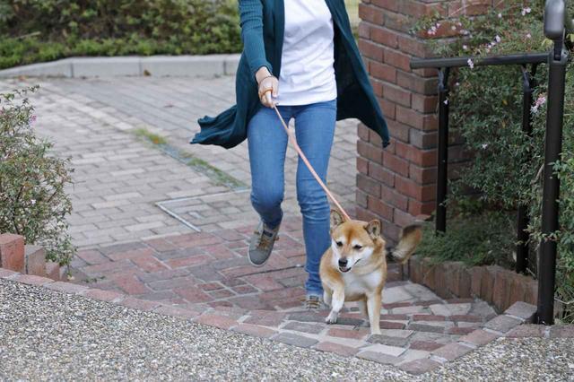 画像11: Short Story もう一つの散歩道 @北摂池田メモリアルパーク