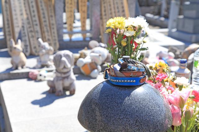 画像: 第1位 ペット用のお墓に入れる