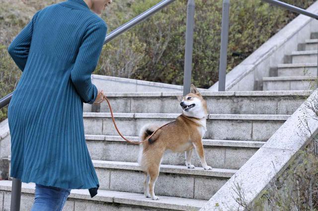 画像4: Short Story もう一つの散歩道 @北摂池田メモリアルパーク