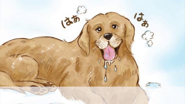 画像: おもいでワンコ手帖「ゴールデンレトリーバー編」 youtu.be