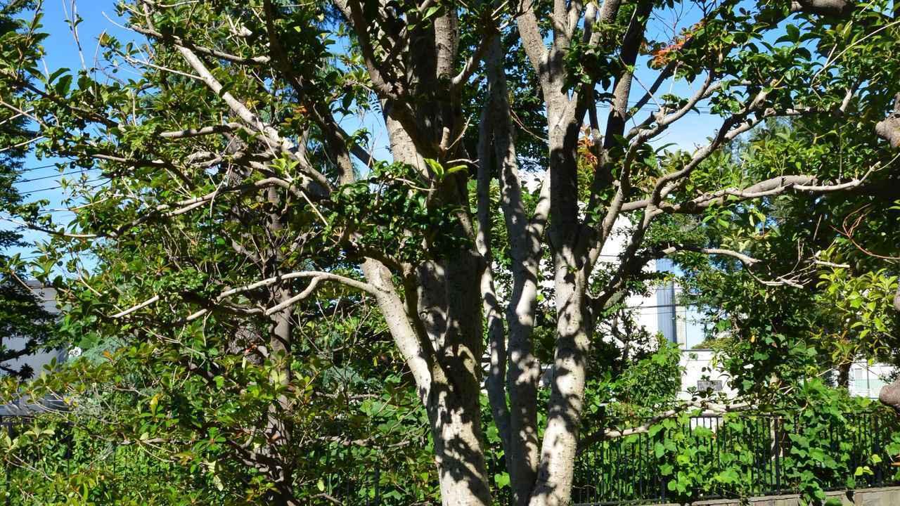 画像: どんな雑木からでも作れる