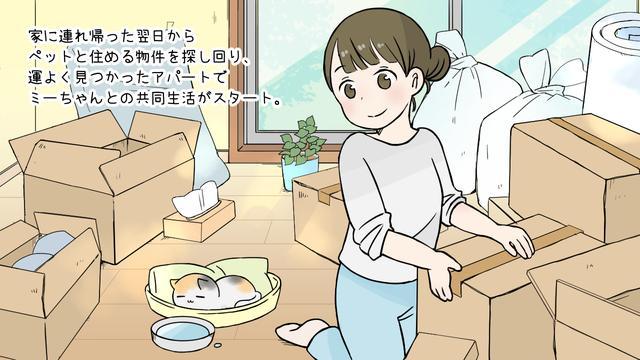 画像: 「ミーちゃんがくれたいっぱいの幸せ」平成にゃんこ物語