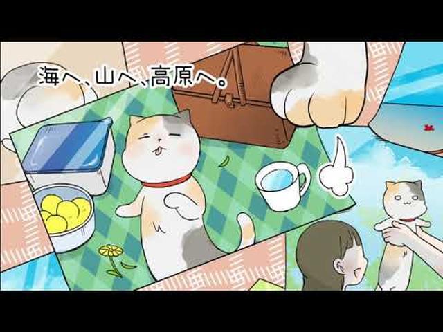 画像: 「ミーちゃんがくれたいっぱいの幸せ」平成にゃんこ物語 youtu.be