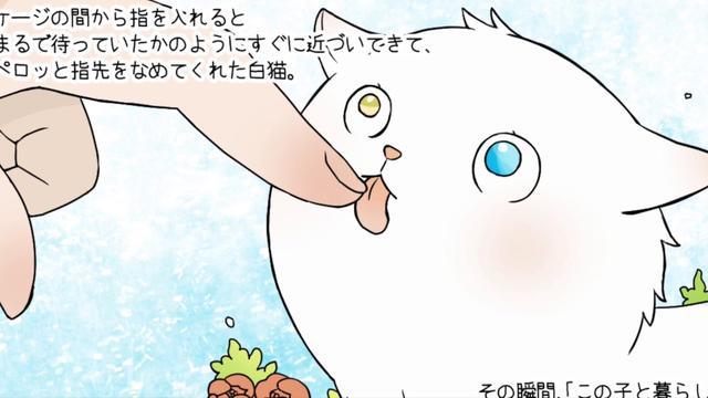 画像: 「不思議な瞳のチビ太」平成にゃんこ物語 youtu.be
