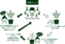画像: オリーブの育て方と保証について