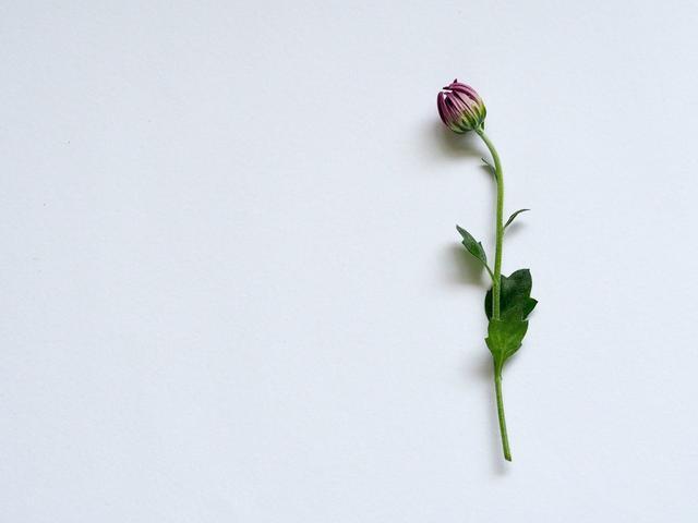 画像: Photo by Plush Design Studio on Unsplash