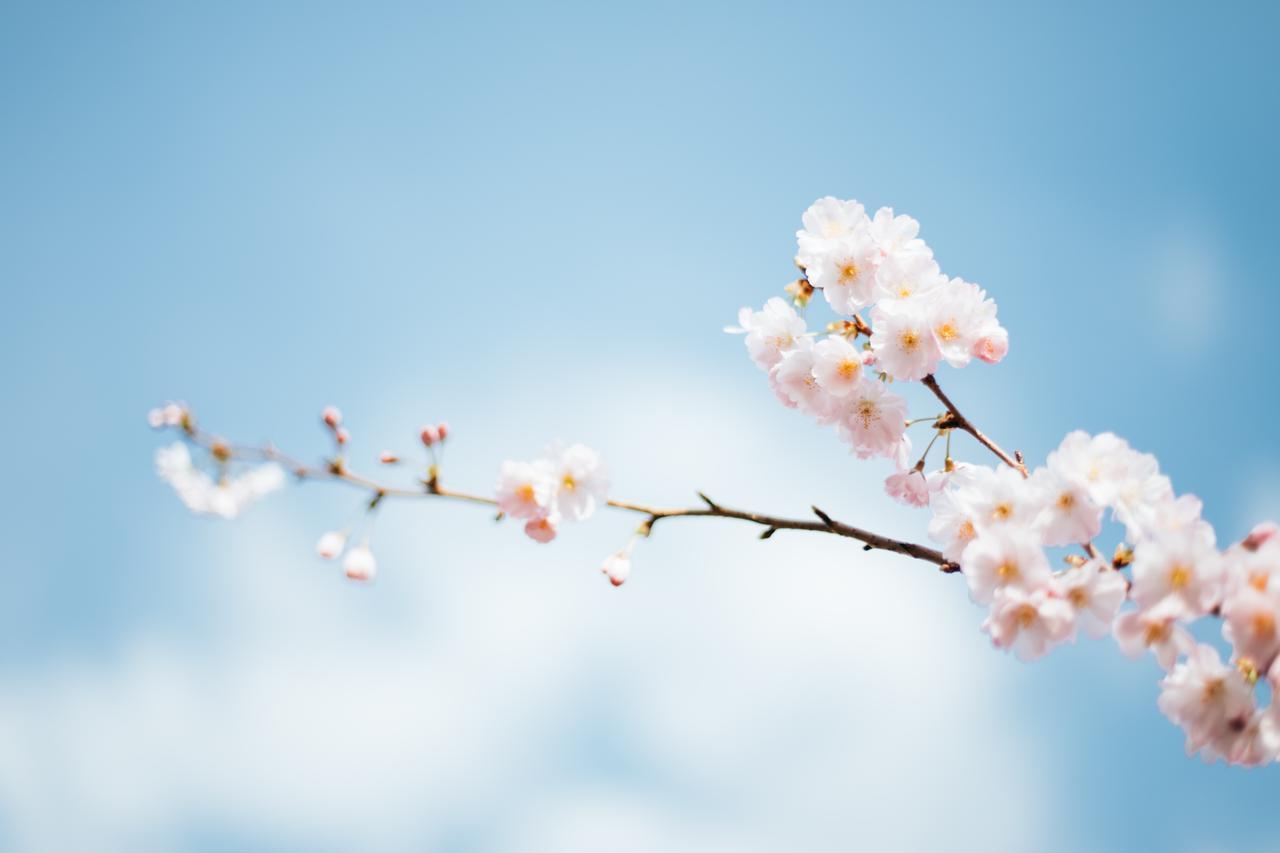 画像: 春のお彼岸とは?春のお彼岸の日にちはいつになる?