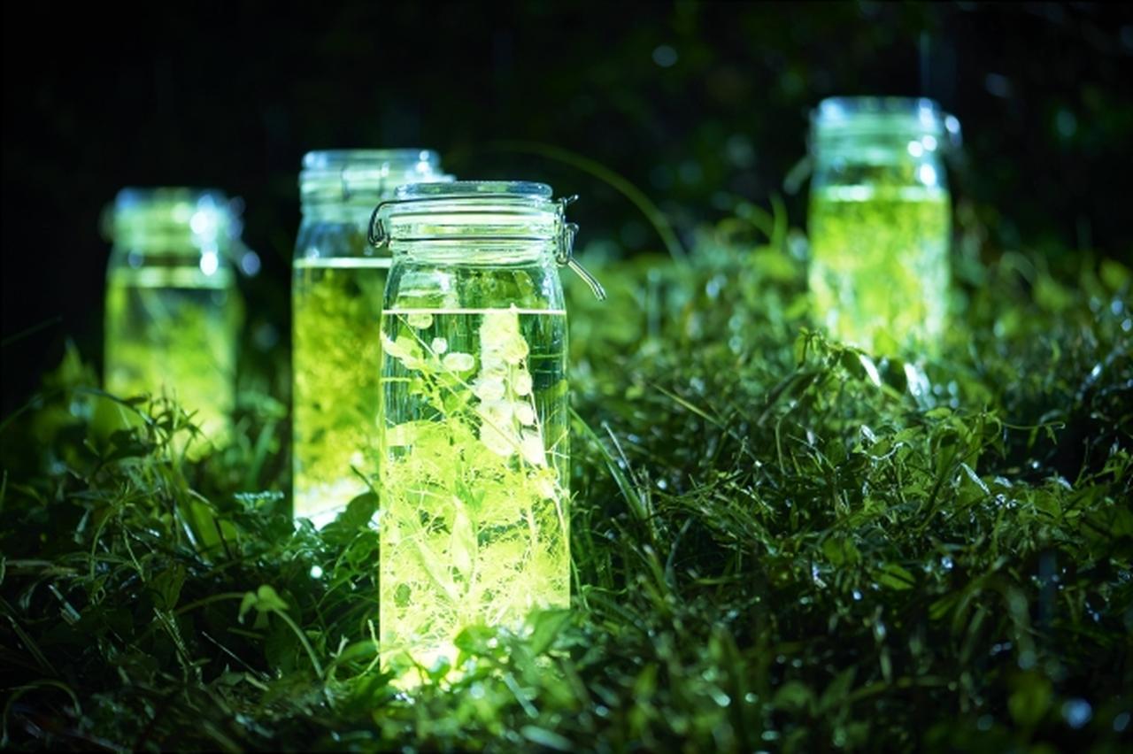 画像2: 花王「ニュービーズ」のボタニカルな香りを表現…光るハーバリウムを使った夏のイルミネーションを日比谷公園で初開催!『ビーズハーバリウム in ヒビヤアカリテラス2019』