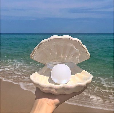 画像: [Qoo10] シェルランプ貝殻ランプシェルライト : 家具・インテリア