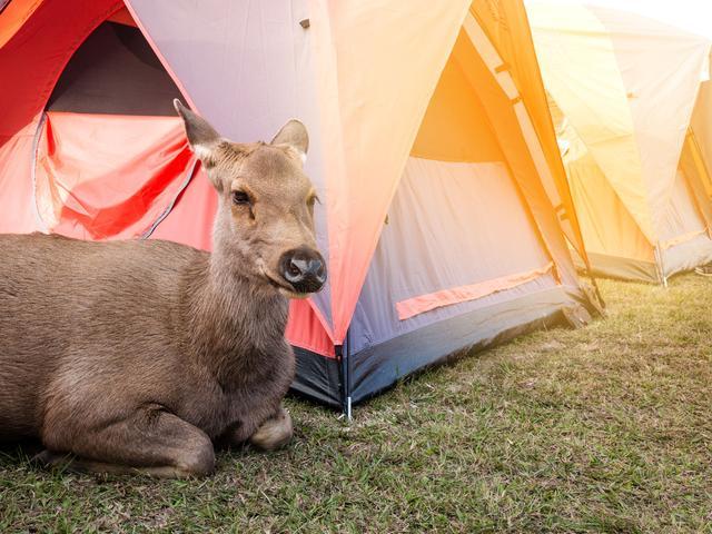 画像: さずが鹿番長・キャンプテンスタッグ!高評価で頼りになる存在。