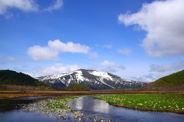 画像: 【花の名山④】「群馬・市仏山」花好きなら一度は登っておきたい 希少な高山植物が咲く山 花畑が広がる夏から秋がおすすめ