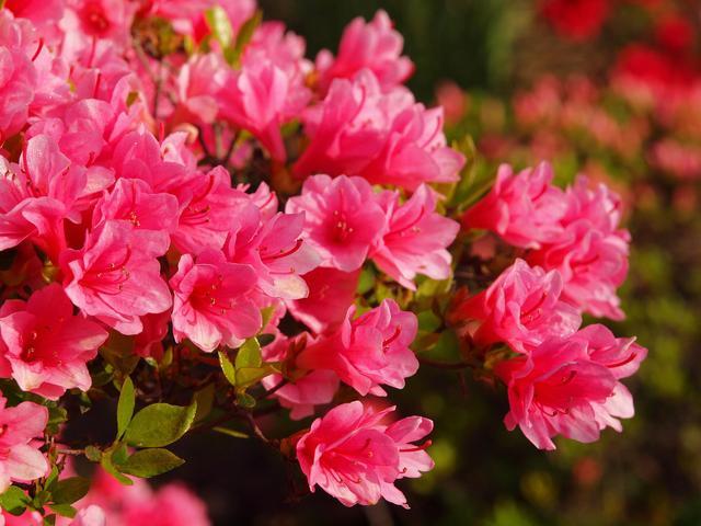 画像: 関東近郊には花を楽しみながら登れる山がたくさん! 日帰りハイキングで山に咲く花を気軽に楽しもう!