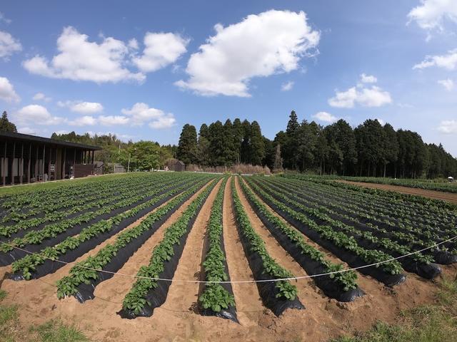 画像: 魅力6.野菜収穫体験が楽しすぎてスゴイ!