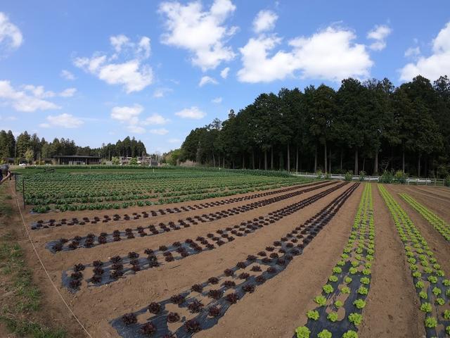画像: 1年を通じて約50種類の作物が育てられている畑