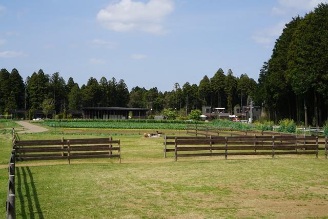 画像: 畑が見える、持ち込みテントサイト。