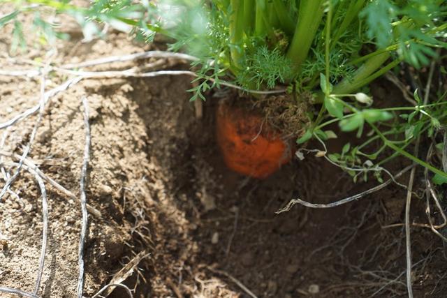 画像: オレンジの姿が見えてきました。