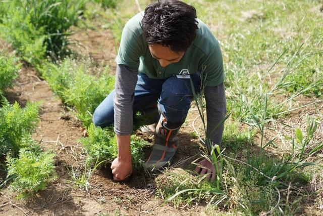 画像: スタッフさんが優しく収穫方法をレクチャーしてくれます。