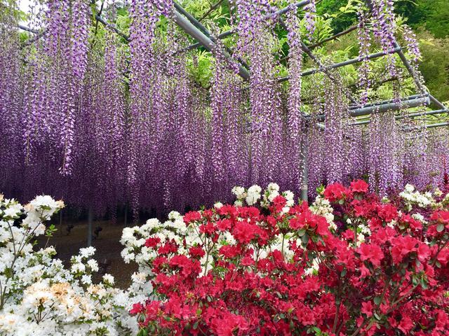 画像: あわせて行きたい! 四季折々の花が楽しめる「あしかがフラワーパーク」