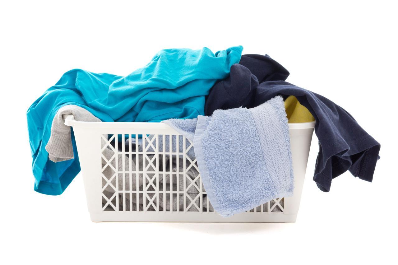 画像: マダニが衣服に付着していて、気づかずに家の中に持ち込んでしまう可能性も!