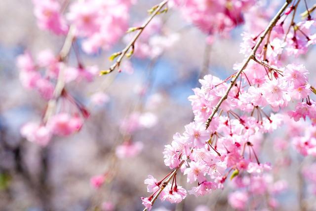 画像: 春のお花見キャンプはファミリーで、周辺施設も含め満喫しよう