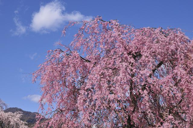 画像: 2.リバーランズ角川(滋賀県)