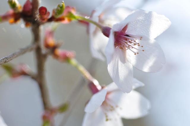 画像: 花見と手作り絵付け体験が楽しめるキャンプ場 5.コミュニティガーデン那須倶楽部(栃木県)