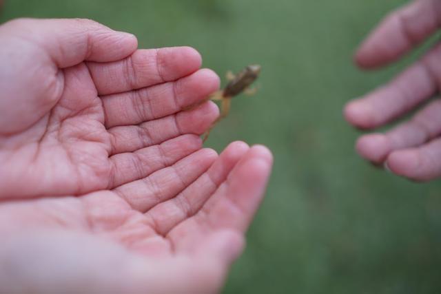 画像: 筆者撮影:カエルが跳ねる瞬間を激写
