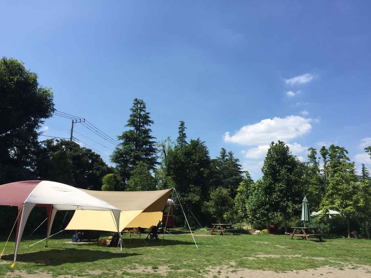 画像: 夏のキャンプは、海や山に潜む危険動植物があることを事前に知っておこう!