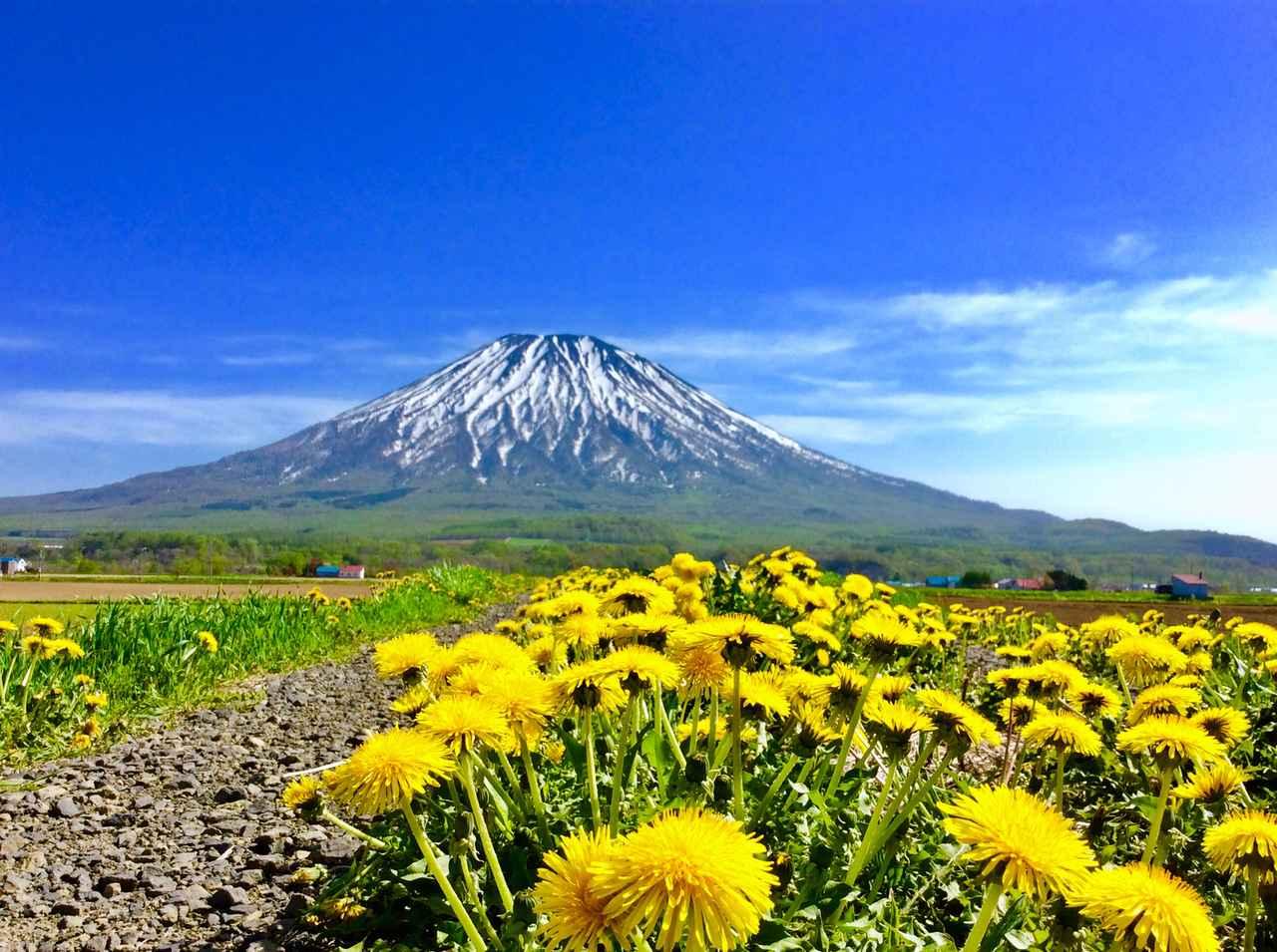 画像: 北海道トレイルランニングinルスツ