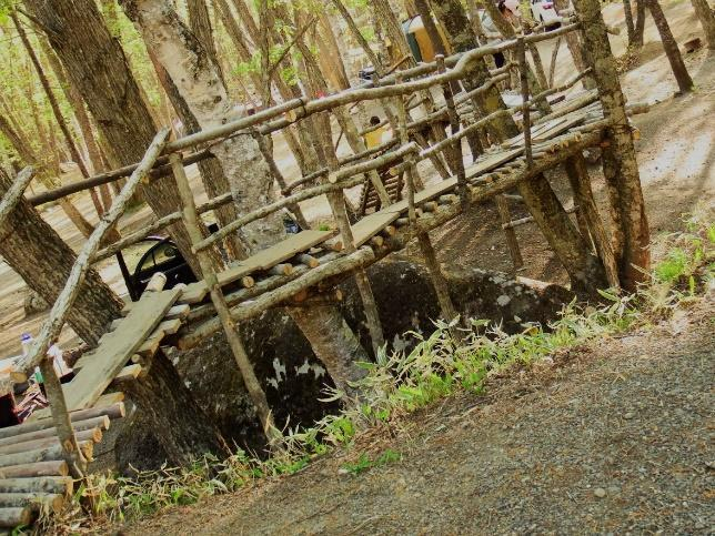画像5: 筆者撮影(林間サイトにて)