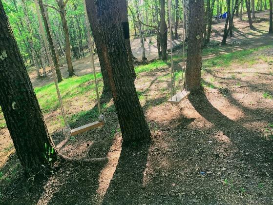 画像3: 筆者撮影(林間サイトにて)