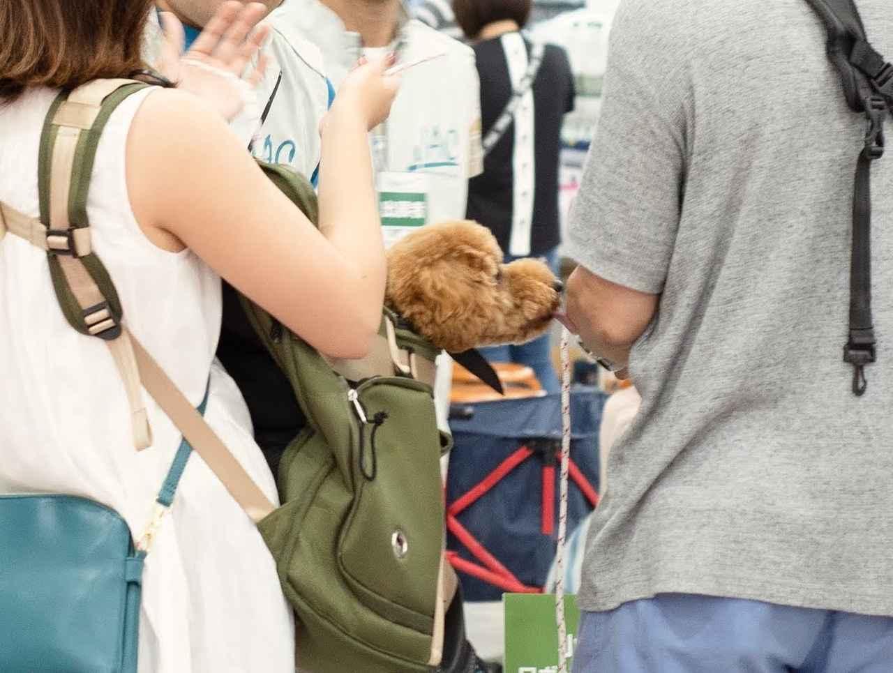 画像: 【カートラジャパン2018】キャンプ場やグルメコーナー 愛犬家で賑わったカートライベント
