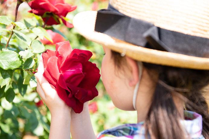 画像: 秋バラはぜひ花に鼻を近づけて(笑)、香りを楽しんで♪