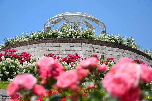画像: 日本最大級!8ヘクタールの広大な敷地に約1500種3万5000株のバラが植えられた「かのやばら園」