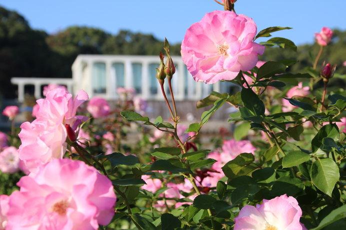 画像: 奥に見えるレストラン「GARDEN PARTAGE 須磨離宮」からは噴水庭園が一望できる